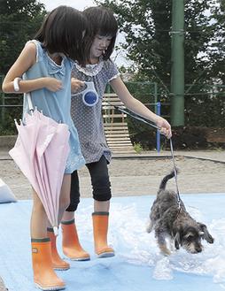 がれきを想定したペットボトルの上をペットと歩く訓練