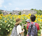3万本ひまわり畑を開放