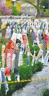 大岡川にこいのぼり