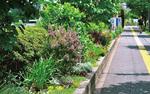 メンバーが手がけた港南地域ケアプラザの植栽