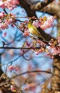 一足先に春満喫