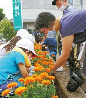 花苗を植える丸山台小1年児童ら