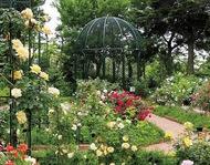 植物園で自然体験