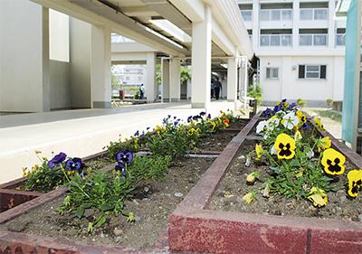 受刑者が整備する花壇 受刑者が整備する花壇   タウンニュース