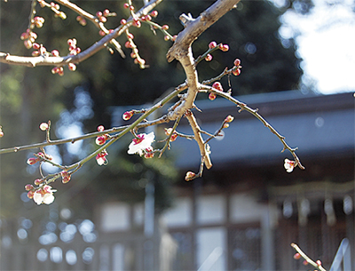 遅い春の息吹