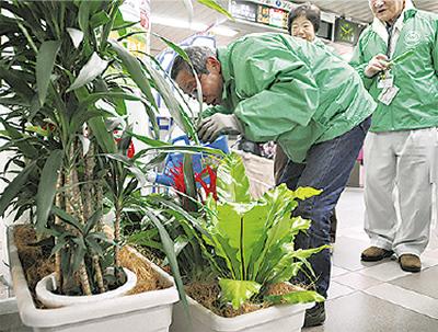 地下鉄駅に観葉植物