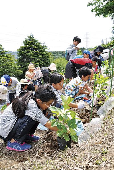 子どもたちがあじさい植樹