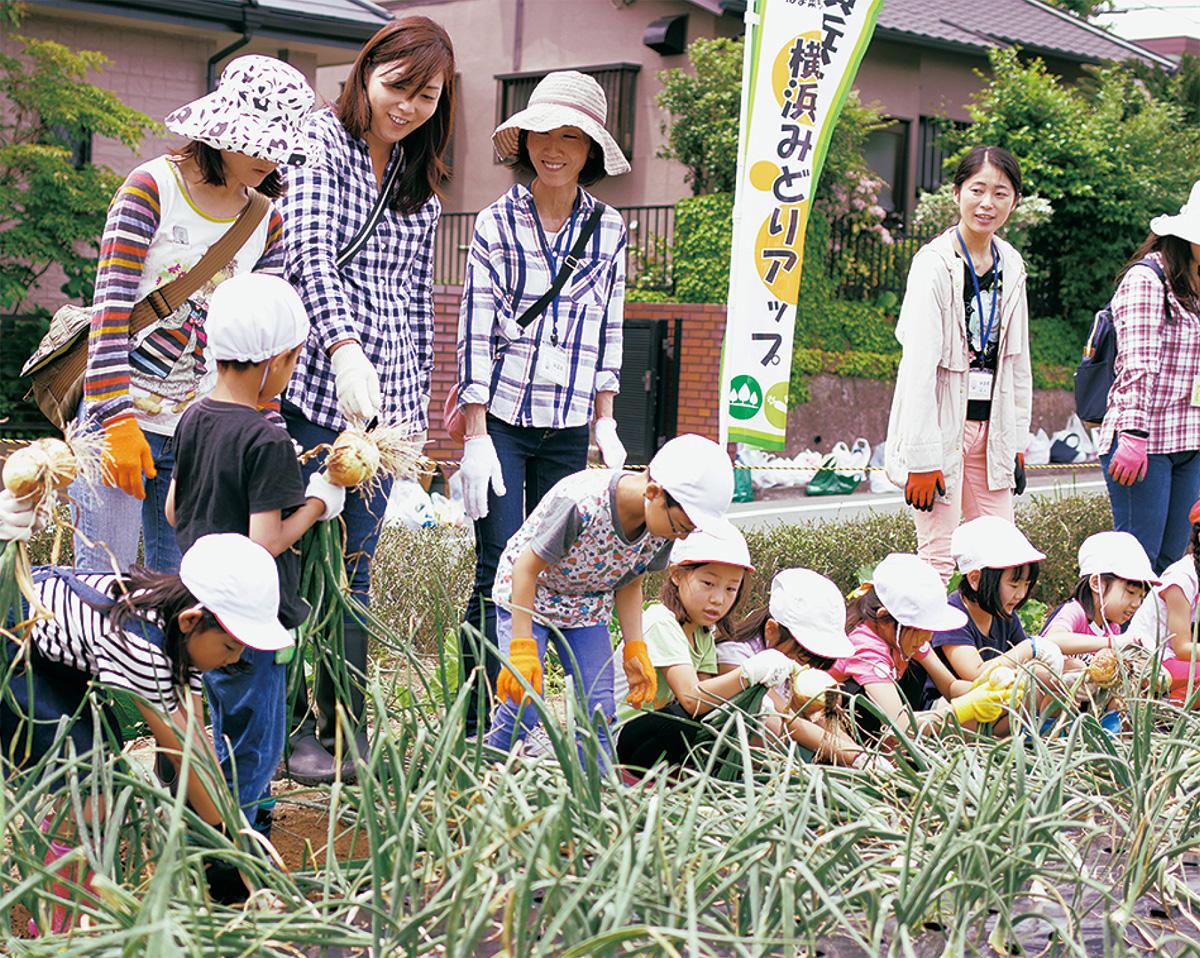 住宅街でタマネギ収穫