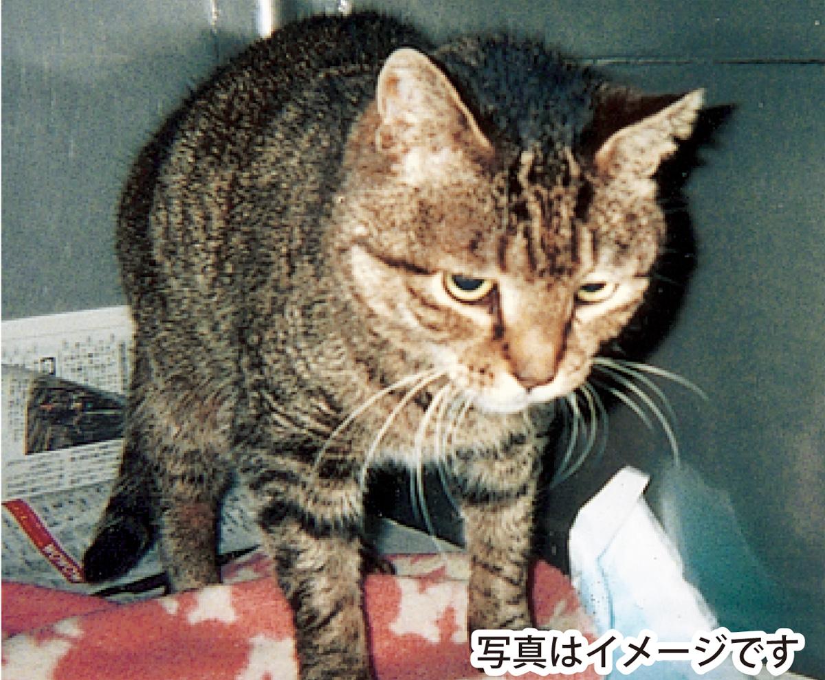 「不幸な猫」を減らそう