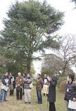 樹齢100年を超えるヒマラヤスギの巨木の前で同校の樹木管理について説明を受ける参加者