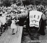 「野毛山遊園地」開園の昭和26年に来園したインドゾウの「はま子」もポストカードに