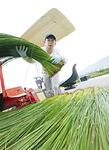 八代市の農家で泊り込みの農作業体験(右)