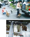 浪江町での給餌活動(上)と保護された猫(下)池田千代子さん提供