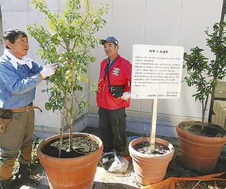 3代目となるゆずの木を設置する貝塚さん(左)と平野さん(10月8日)。「ゆず×かぼす」と掲げられた看板には設置に対する思いが記されている