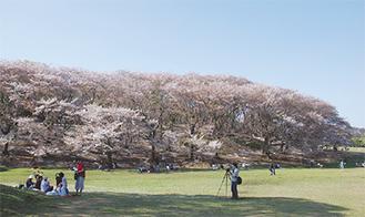 市内随一の桜の名所
