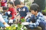 パンジーの植え替えに挑戦する児童ら