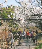 満開の梅を眺める来園者たち=17日撮影