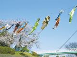 野毛山動物園の空を彩る「のげのぼり」
