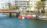 大岡川の長者橋から末吉橋まで飾られている鯉のぼり=19日撮影