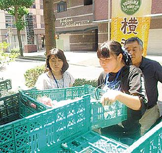 野菜を陳列する高校生