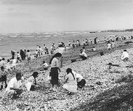 『本牧十二天から続いた自然豊かな海』