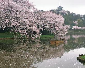 三溪園も八聖殿も神社も公園も・・・本牧は桜の名所が満載(写真提供:三溪園)