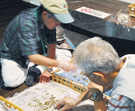 三溪園で蚕を育成中