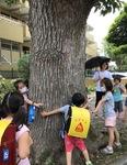 (1年生)通学路にあった大きな木を囲む子どもたち