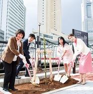 大岡川にシドモア桜