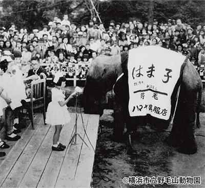 野毛山動物園が60周年
