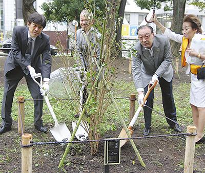 大通り公園に米沢産桜
