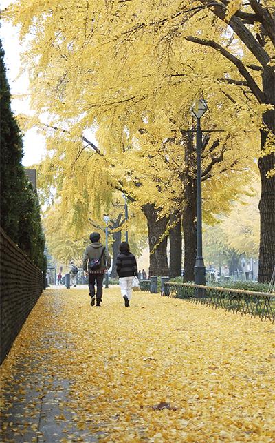 秋の終わり告げる