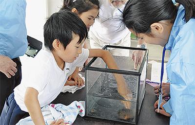 日本海の生物に興味津々