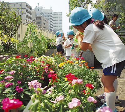 野菜や花育て、ベランダ緑化