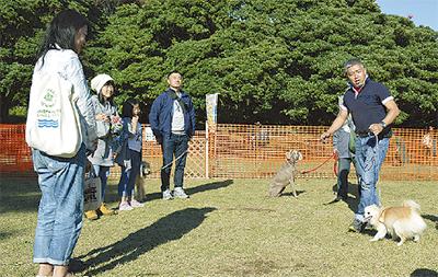 犬71頭が芝駆ける