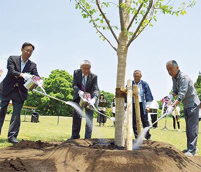 シンボルの桜植え