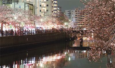 夜桜も魅力(過去の様子)