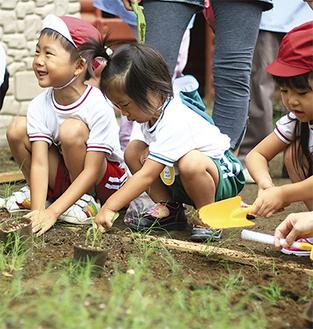 芝の苗を植える園児たち