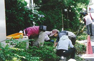 中村川沿いを清掃