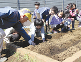 住民の指導を受けてイモを植える児童