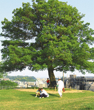 まとまった緑がある清水ヶ丘公園