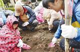 芋を掘る親子