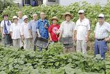 菜園作りを行う老人クラブの会員