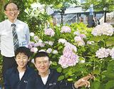 アジサイを囲む佐々木教諭とグリーンクラブの生徒