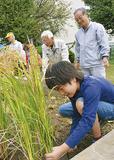 農援隊メンバーの指導を受け稲を刈る児童