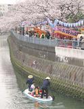 桜が満開の大岡川沿い(昨年)