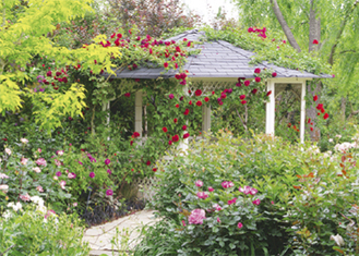 バラの香りが広がる園内