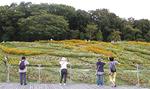 全国都市緑化よこはまフェアの終了後、9月から10月に再公開された「里山ガーデン」=旭区=