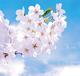 桜さくら ら・ら・ら