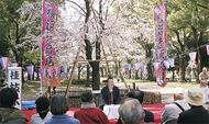 満開歌丸桜前で落語など楽しむ